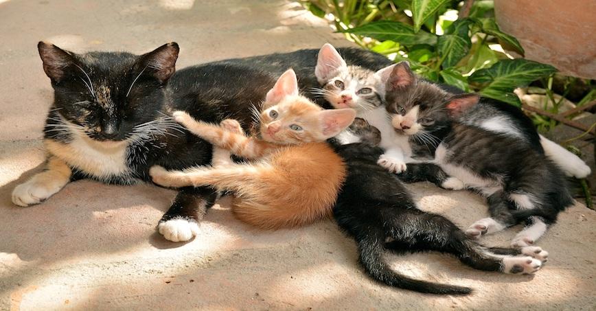 chats-mignons.com